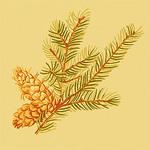 Ткань для штор F96337 Castle Pine Thibaut