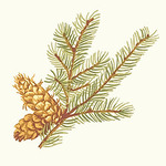Ткань для штор F96338 Castle Pine Thibaut
