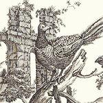 Ткань для штор F96341 Castle Pine Thibaut