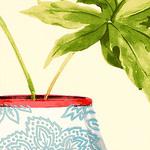 Ткань для штор F81156 Waterlily Thibaut